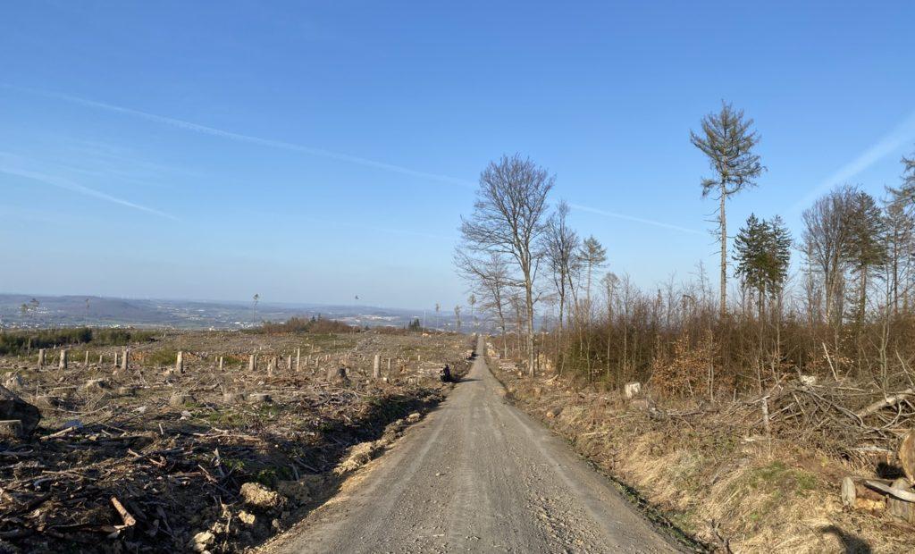 Auswirkungen des Borkenkäferbefalls im Westerwald